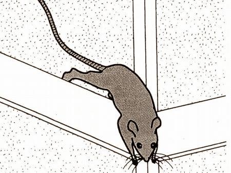 ネズミの進入口
